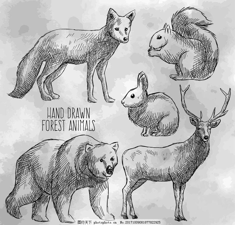 5款手绘森林动物矢量素材 速写 素描 野生 狐狸 松鼠 可爱 插画