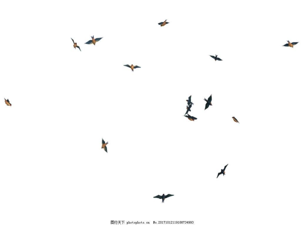 黑色飞鸟免抠png透明素材