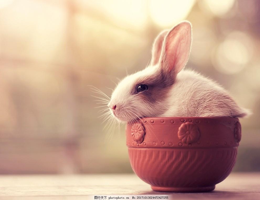 唯美可爱的小兔子,唯美兔子特写 动物 萌宠兔兔 绿草