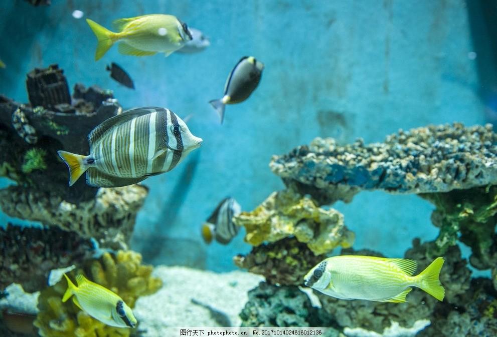 海洋馆鱼 海洋鱼类 海鱼 海洋鱼类动物 摄影