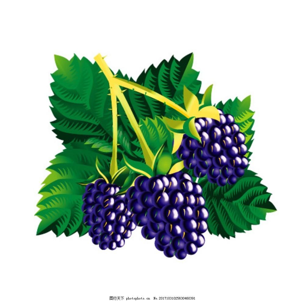 手绘水果矢量图