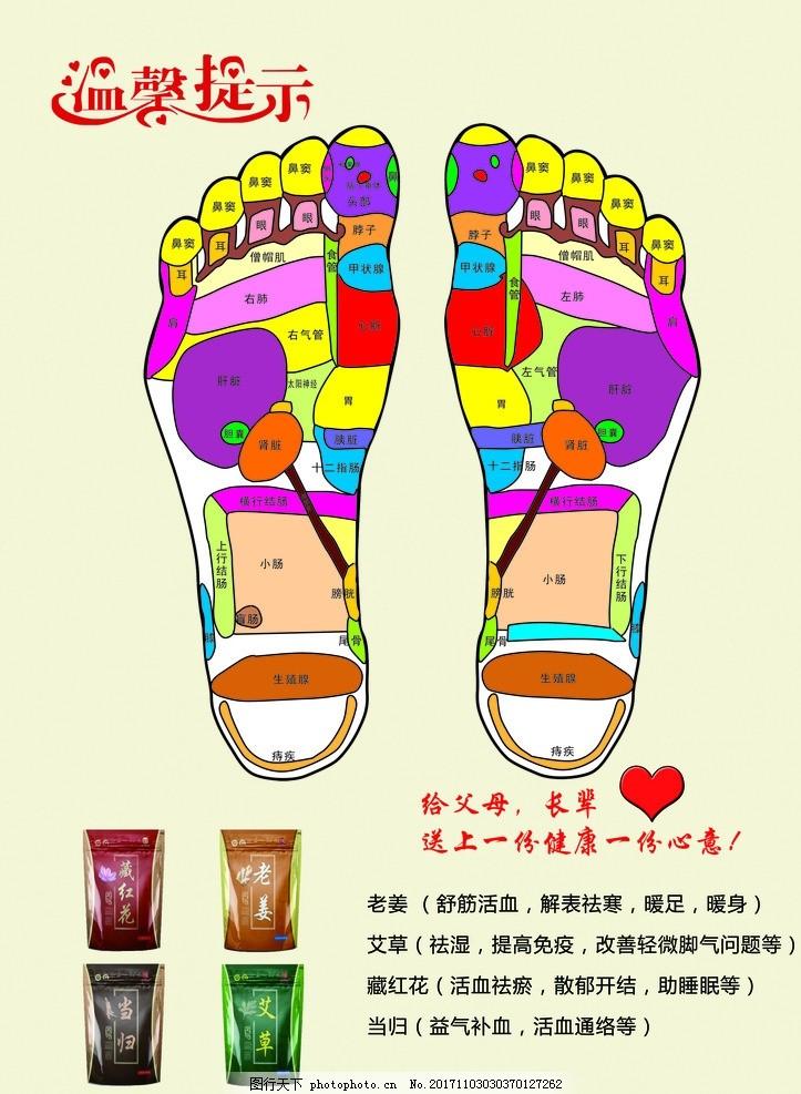 足疗养生 老年人 中医 学位 脚掌 彩色 示意图