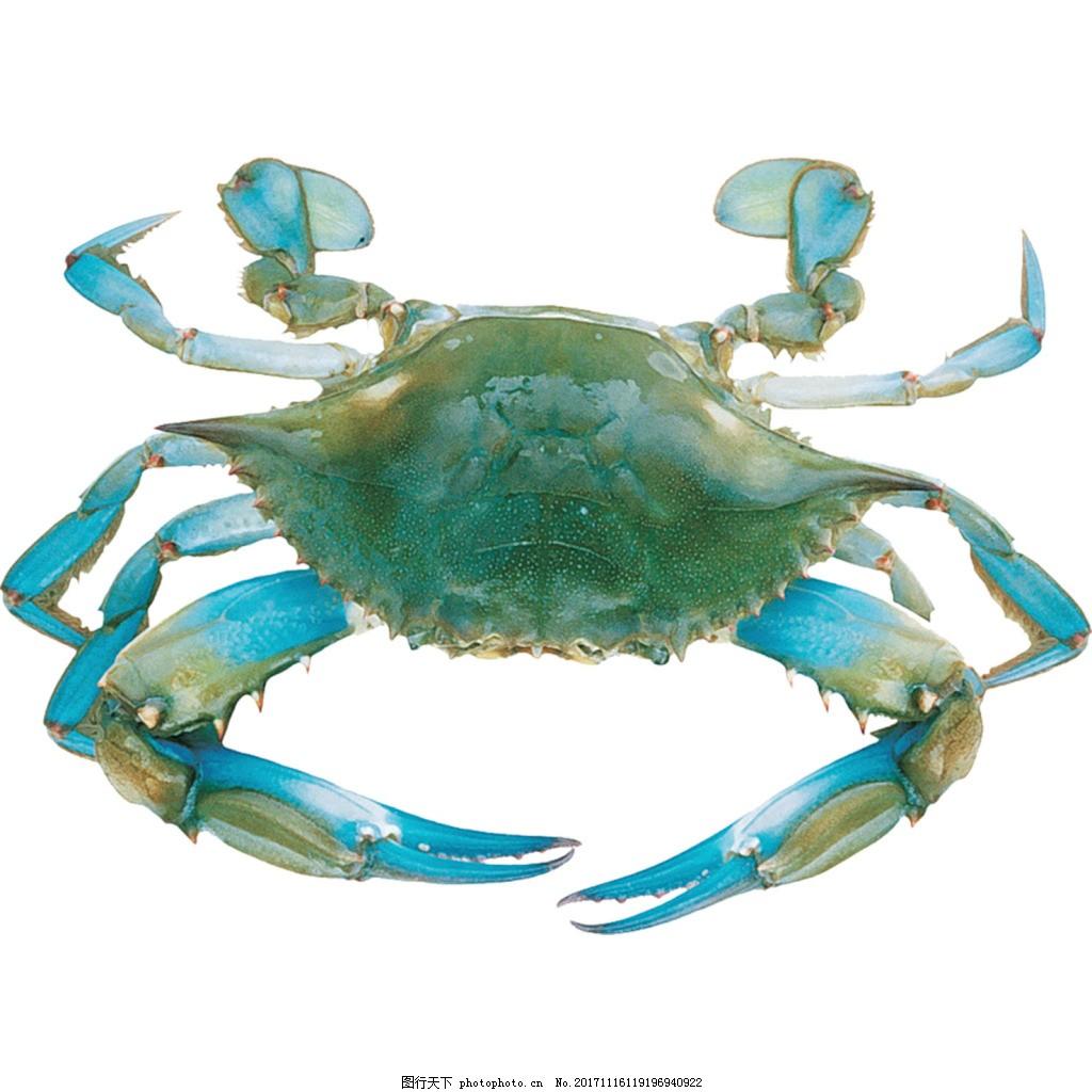 手绘蓝色螃蟹元素