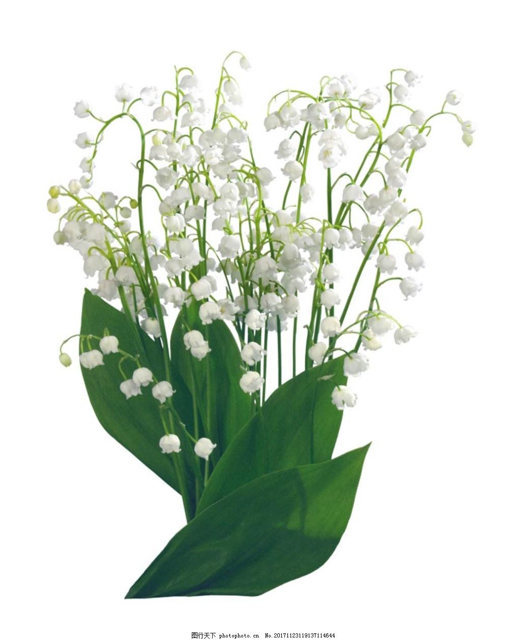 手绘绿叶花朵元素 满天星 花卉 免抠
