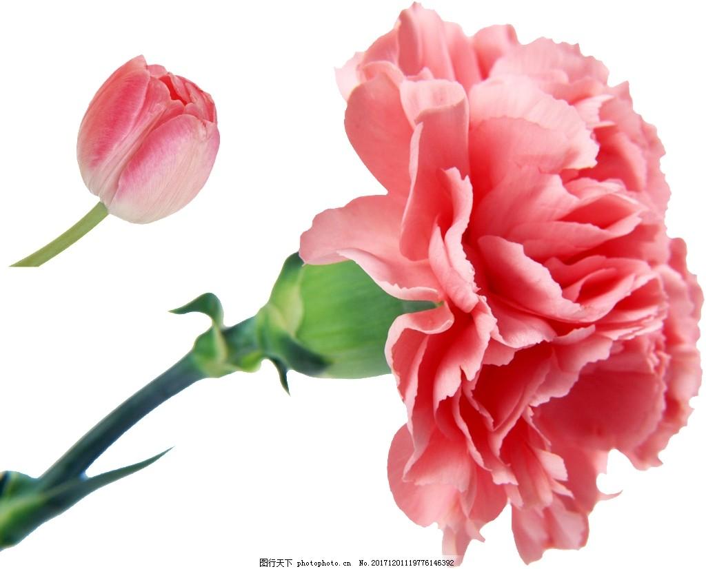 芬芳粉色花朵卡通透明素材 粉色 花朵 png透明素材 卡通 抠图专用 png