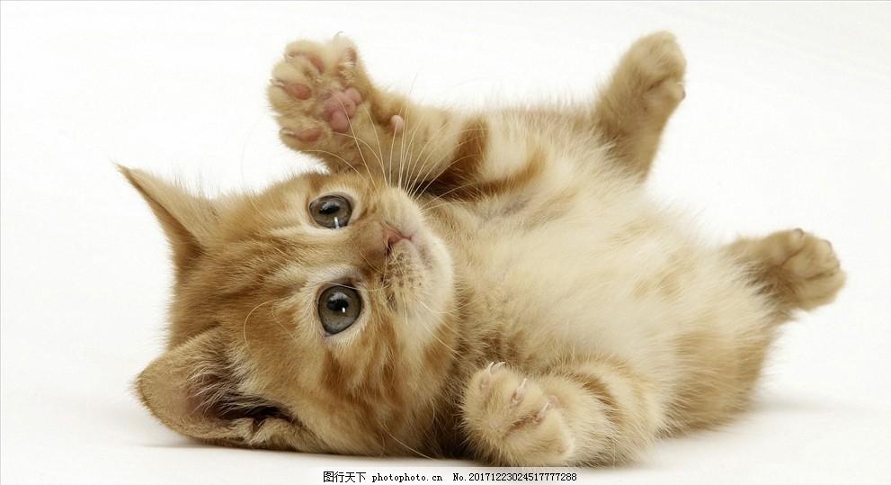 可爱动物猫咪 猫咪素材 摄影作品集 野生动物高清 萌系壁纸素材