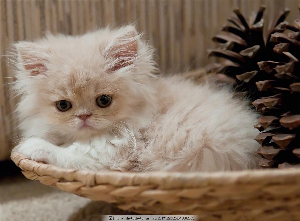 可爱动物猫咪 小猫咪 摄影作品集 野生动物高清 萌系壁纸素材