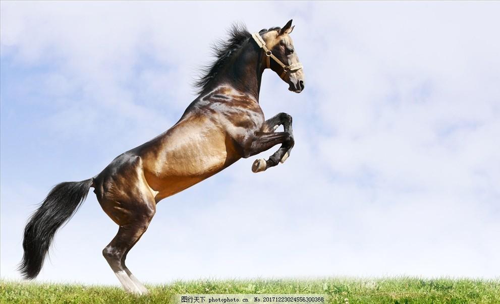 骏马 奔跑的马