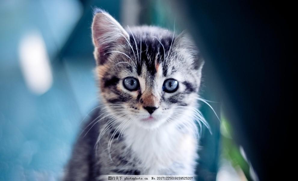 壁纸 动物 猫 猫咪 小猫 桌面 991_603