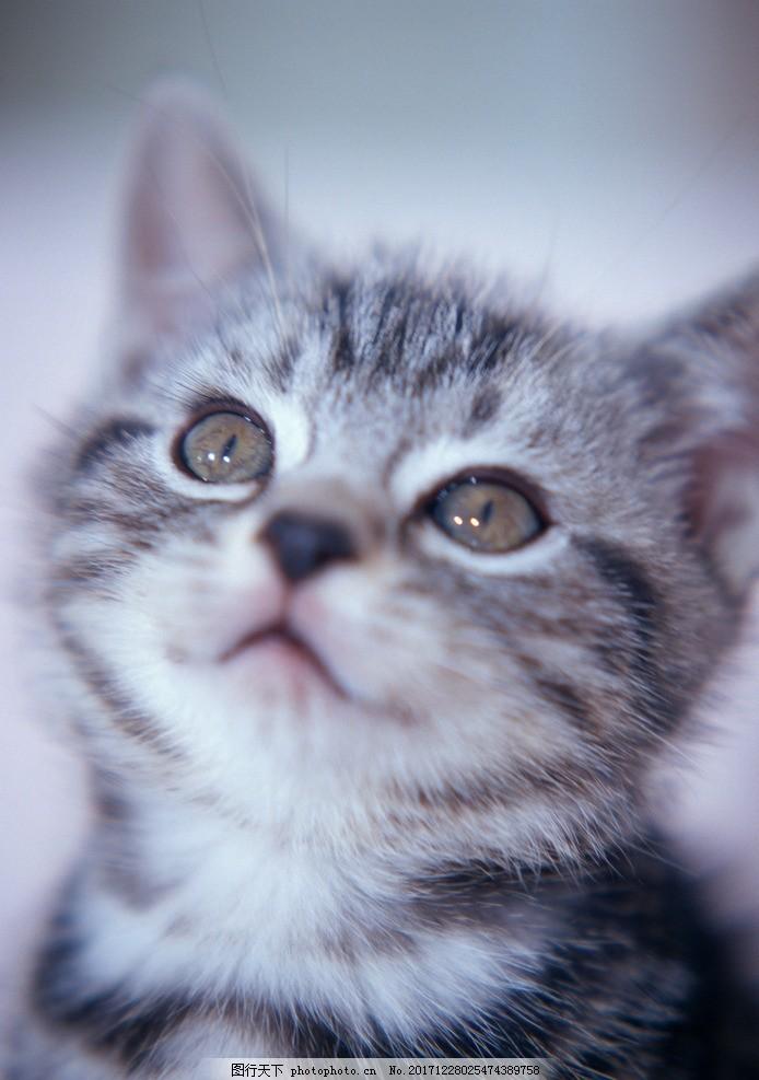 宠物 猫 可爱 萌萌的 爱宠 喵星人 摄影 其他生物